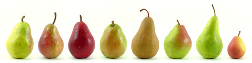Eight varieties of pear