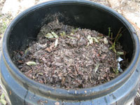 Brown leaves in bin