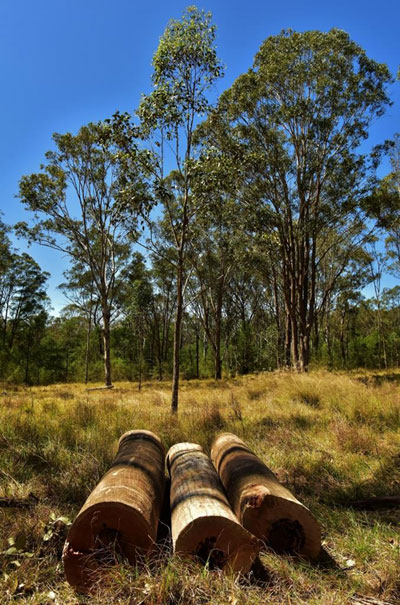 Mulgoa Logs (c)Wildside-Au